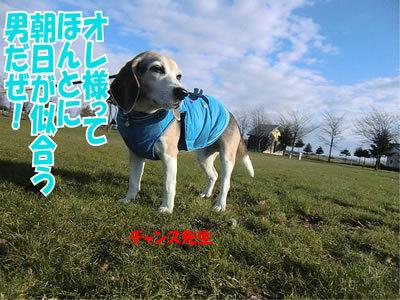 チャンスとティアラ+ココ-20111124-11
