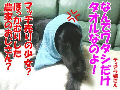 チャンスとティアラ+ココ-20111126-400-3.jpg