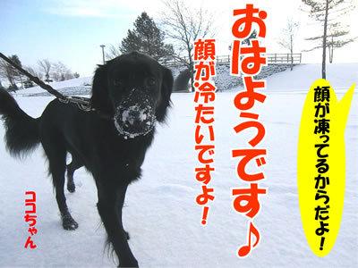$チャンスとティアラ+ココ-20111205朝ココ400.jpg