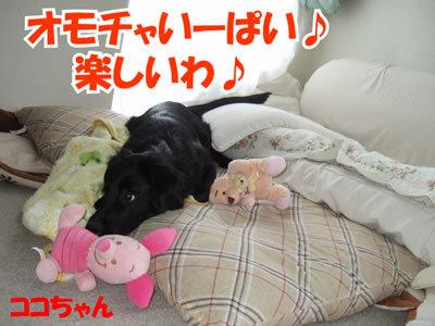 チャンスとティアラ+ココ-20100214-6.jpg