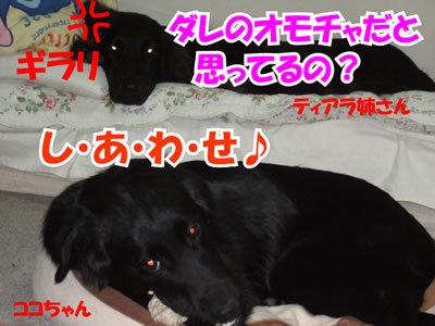 チャンスとティアラ+ココ-20100214-7.jpg