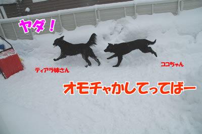 チャンスとティアラ+ココ-20100218-2.jpg