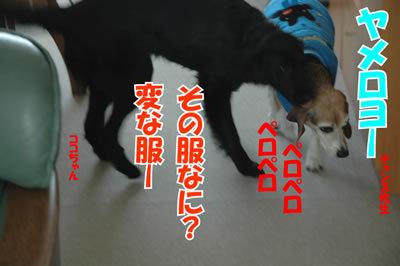 チャンスとティアラ+ココ-20100218-5.jpg