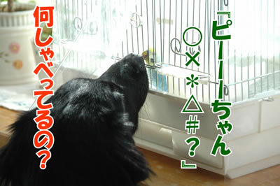 チャンスとティアラ+ココ-20100218-7.jpg
