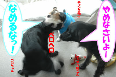 チャンスとティアラ+ココ-20100225-1.jpg