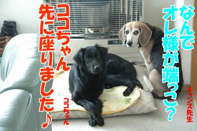チャンスとティアラ+ココ-20100225-4.jpg