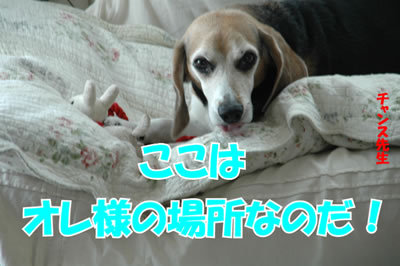 チャンスとティアラ+ココ-20100225-5.jpg