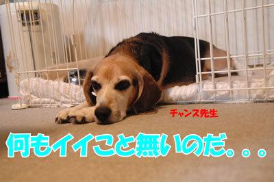 チャンスとティアラ+ココ-20100225-7.jpg