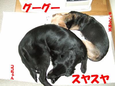 チャンスとティアラ+ココ-20100225-8.jpg
