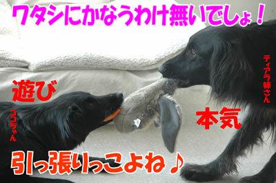 チャンスとティアラ+ココ-20100304-4.jpg
