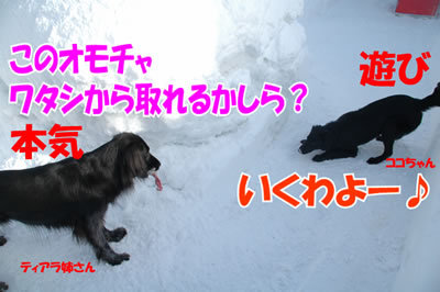 チャンスとティアラ+ココ-20100304-5.jpg
