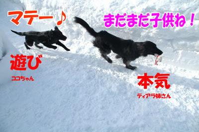 チャンスとティアラ+ココ-20100304-6.jpg