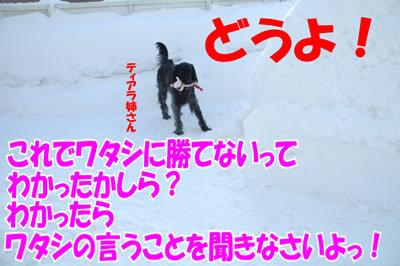 チャンスとティアラ+ココ-20100304-7.jpg