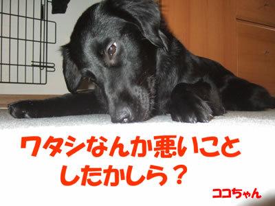 チャンスとティアラ+ココ-20100304-8.jpg