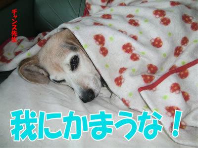 チャンスとティアラ+ココ-20111222-1.jpg