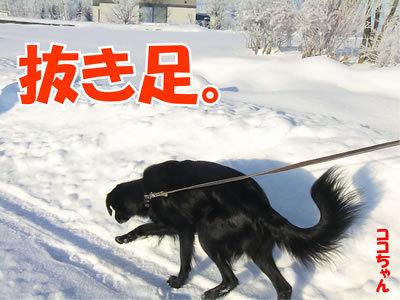 チャンスとティアラ+ココ-20111222-2.jpg