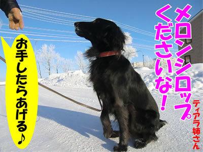 チャンスとティアラ+ココ-20111222-3.jpg