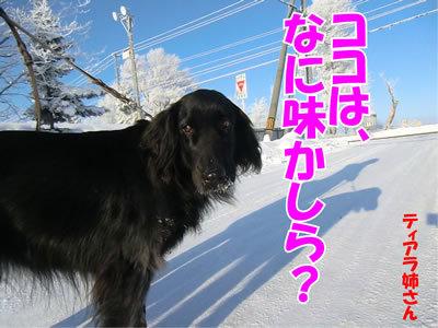 チャンスとティアラ+ココ-20111222-4.jpg
