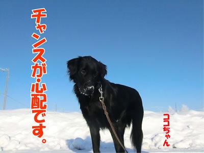 チャンスとティアラ+ココ-20111222-5.jpg