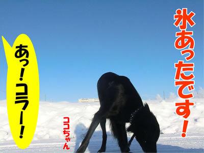 チャンスとティアラ+ココ-20111222-6.jpg
