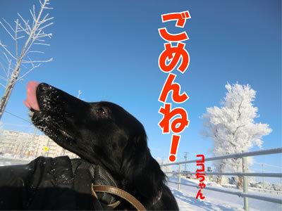 チャンスとティアラ+ココ-20111222-7.jpg