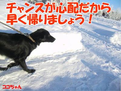 チャンスとティアラ+ココ-20111222-8.jpg
