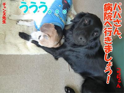 チャンスとティアラ+ココ-20111222-10.jpg