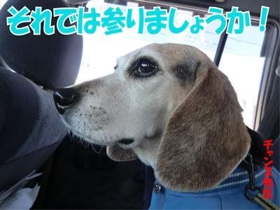 チャンスとティアラ+ココ-20111223-1.jpg