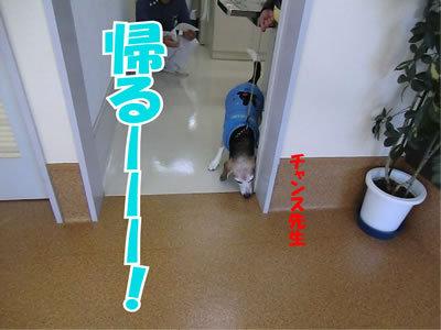 チャンスとティアラ+ココ-20111223-6.jpg