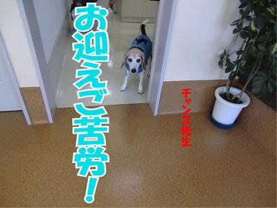 チャンスとティアラ+ココ-20111223-8.jpg