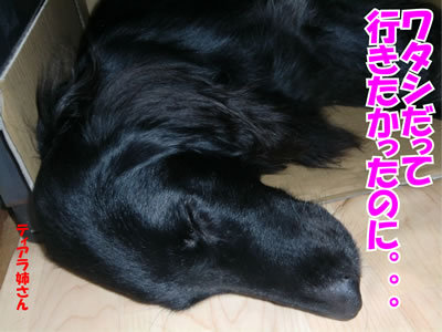 チャンスとティアラ+ココ-20111223-11.jpg