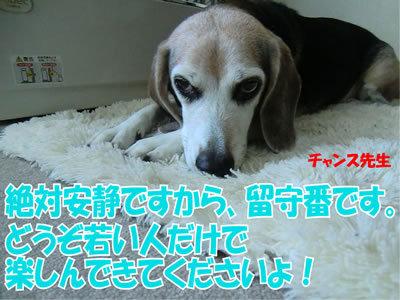 チャンスとティアラ+ココ-20111224-1.jpg