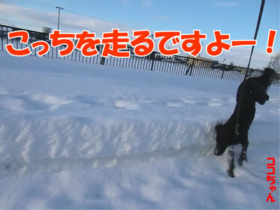チャンスとティアラ+ココ-20111224-4.jpg