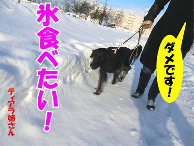 チャンスとティアラ+ココ-20111224-5.jpg