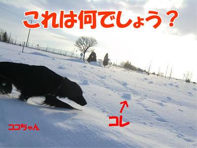 チャンスとティアラ+ココ-20111224-6.jpg