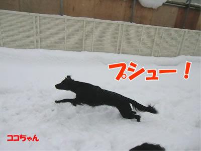 チャンスとティアラ+ココ-20111224-7.jpg