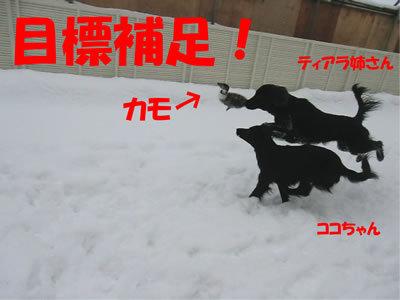 チャンスとティアラ+ココ-20111224-9.jpg