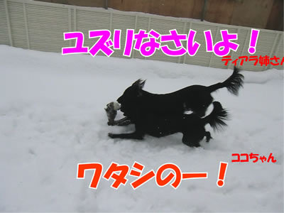 チャンスとティアラ+ココ-20111224-10.jpg