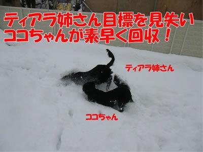 チャンスとティアラ+ココ-20111224-11.jpg