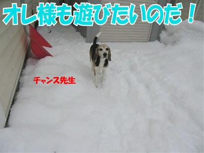 チャンスとティアラ+ココ-20111224-13.jpg