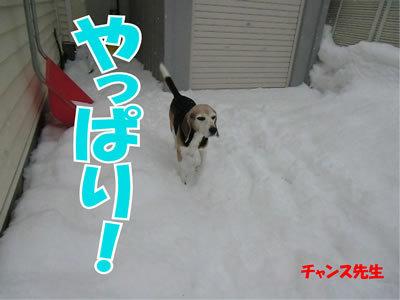 チャンスとティアラ+ココ-20111224-14.jpg