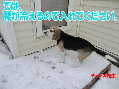 チャンスとティアラ+ココ-20111224-15.jpg