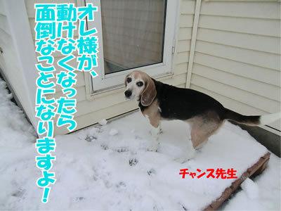 チャンスとティアラ+ココ-20111224-16.jpg
