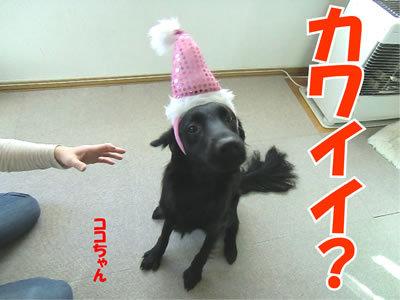 チャンスとティアラ+ココ-20111224-21.jpg