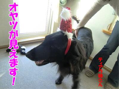 チャンスとティアラ+ココ-20111224-23.jpg