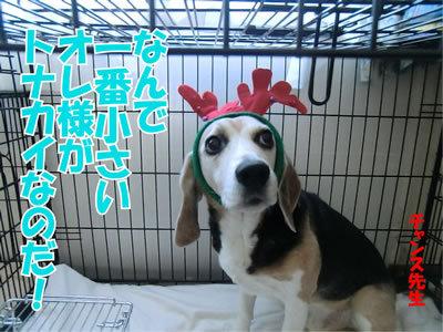 チャンスとティアラ+ココ-20111224-24.jpg