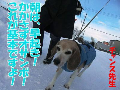 チャンスとティアラ+ココ-20111225-2.jpg