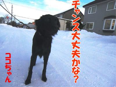 チャンスとティアラ+ココ-20111225-3.jpg