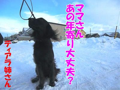 チャンスとティアラ+ココ-20111225-4.jpg
