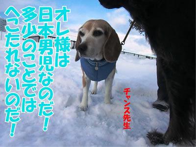 チャンスとティアラ+ココ-20111225-5.jpg